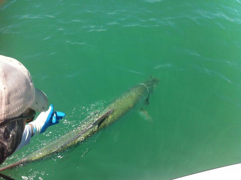 Hill tide dates for 2017 boca grande tarpon for Tide for fishing