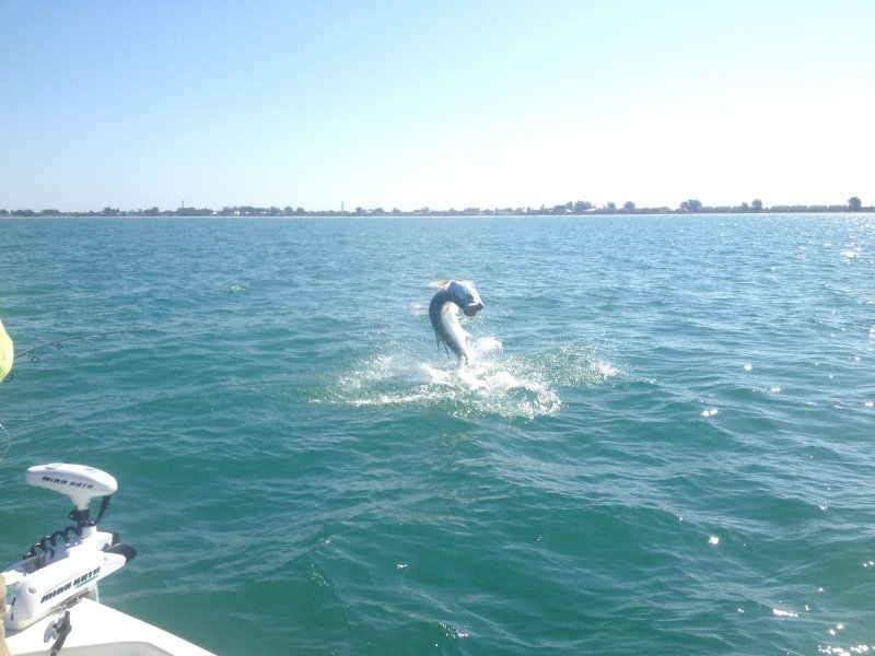 Boca Grande Tarpon Fishing - Fly 'Em High Charters
